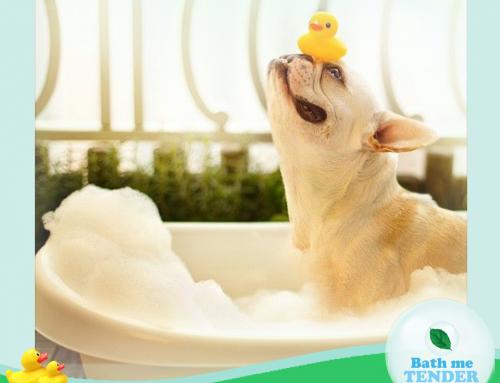 (Thai) อาบน้ำหมา: วิธีการอาบน้ำสุนัขอย่างถูกวิธี