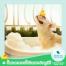 Bath me Tender อาบน้ำหมา อย่างไรให้ถูกวิธี ขั้นตอนการอาบน้ำหมา วิธีการอาบน้ำสุนัข