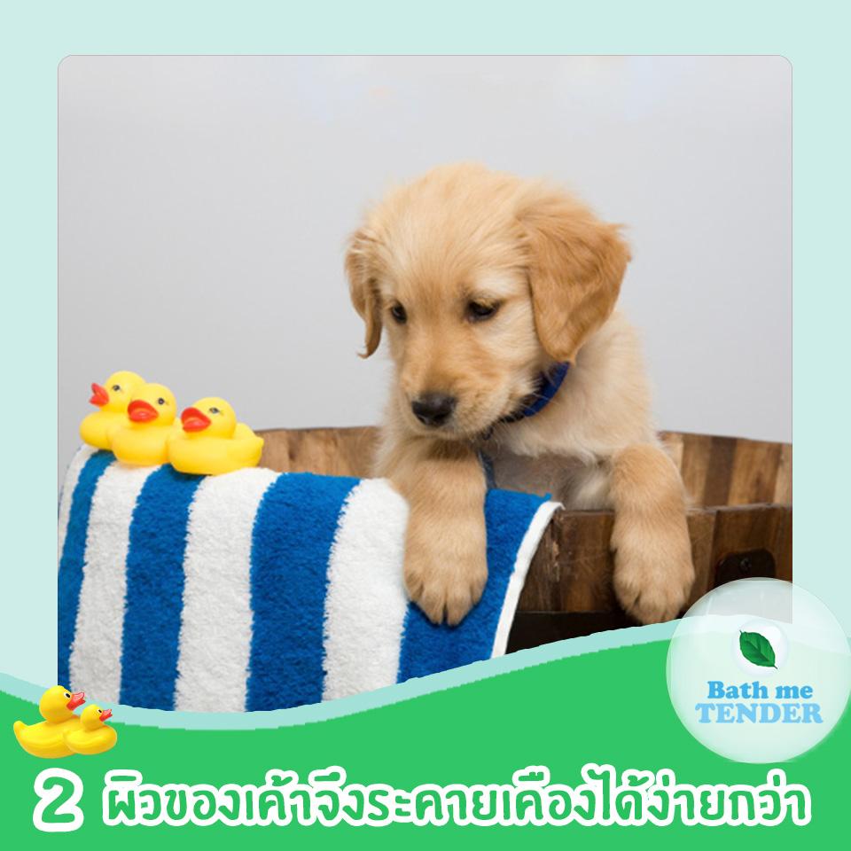 ผลิตภัณฑ์ออร์แกนิค ดีกับน้องหมาแมวอย่างไร Bath me Tender 3