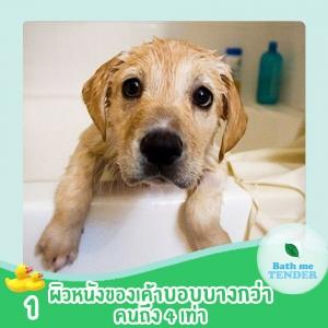 ผลิตภัณฑ์ออร์แกนิค ดีกับน้องหมาแมวอย่างไร Bath me Tender 2