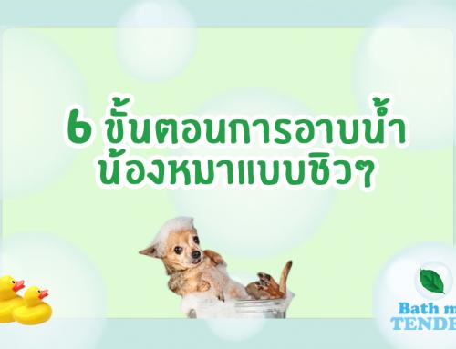 6 ขั้นตอนการอาบน้ำน้องหมาอย่างถูกวิธี