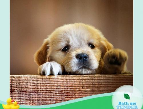 (Thai) 8 อาหารหมาช่วยน้องหมาแก้เครียด