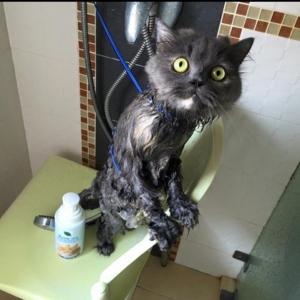 รีวิว แชมพูแมว Organic cat Shampoo Review - Bath me Tender - มูมู่และมีมี่3