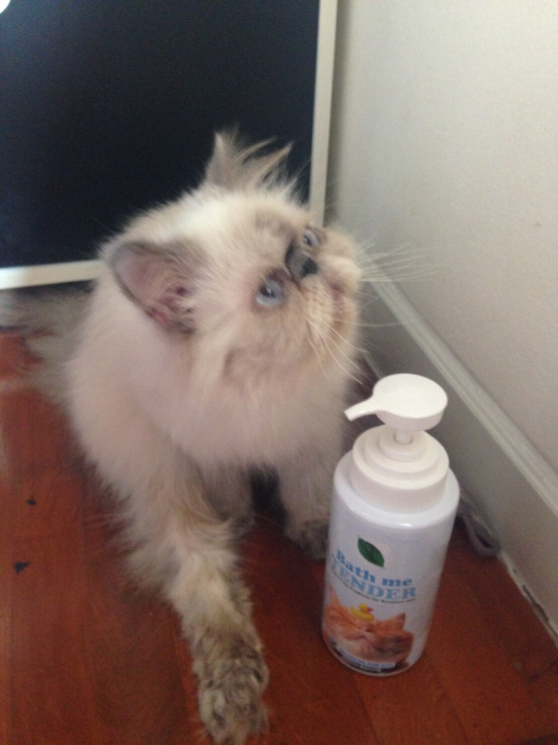 รีวิว แชมพูแมว Bath me Tender customer review - organic cat shampoo - น้องเวลตี้ (2)