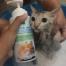 Bath me Tender Organic Cat Shampoo แชมพูแมว ออร์แกนิค ธรรมชาติ - ไข่หวาน 3
