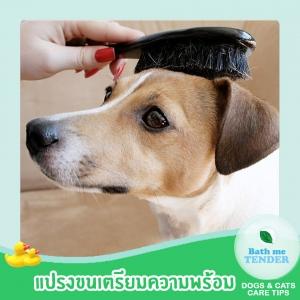 Bath me Tender - อาบน้ำหมา วิธีอาบน้ำสุนัข ขั้นตอนอาบน้ำหมา 1