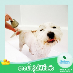 Bath me Tender - อาบน้ำหมา วิธีอาบน้ำสุนัข ขั้นตอนอาบน้ำหมา 2