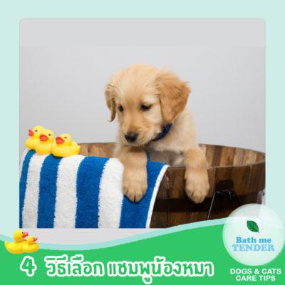 Bath me Tender - Content - 4 วิธีเลือก แชมพูหมา แชมพูสุนัข