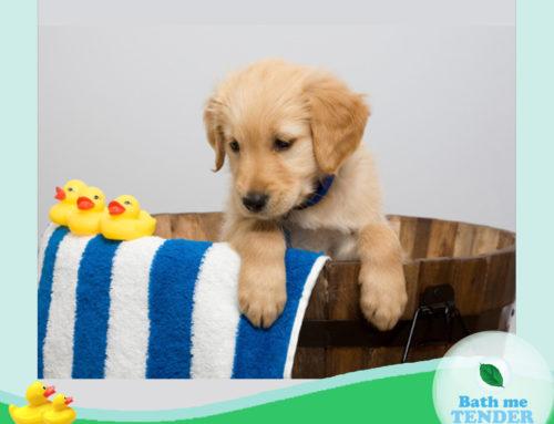(Thai) แชมพูหมา เลือกอย่างไรให้ดีต่อใจและสุขภาพผิวของน้องหมา?